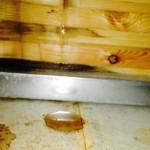 天井裏の欠陥住宅トラブル事例