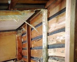 白アリの駆除をしなければ欠陥住宅へまっしぐら