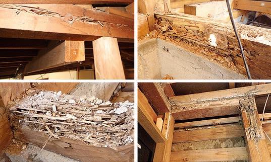 トラブル事例その1. 雨漏りとシロアリの欠陥住宅